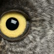 Portrait of Great Grey Owl or Lapland Owl, Strix nebulosa, a very large owl, eye — Стоковая фотография