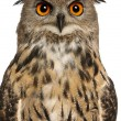 Portrait of Eurasian Eagle-Owl, Bubo bubo, a species of eagle owl in front of white background — Photo