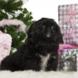 Pekingese puppy, 5 months old, sitting with Christmas tree and gifts in front of white background — Stok fotoğraf