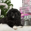 Pekingese puppy, 5 months old, lying with Christmas gifts in front of white background — Foto Stock