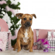 Mixed-breed dog, 7 months old, with Christmas tree and gifts in front of white background - Стоковая фотография