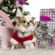 Chihuahua, 2 years old, with Christmas tree and gifts in front of white background — Stock Photo