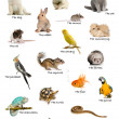 Stock Photo: Collage of pets and animals in English in front of white background, studio shot