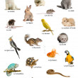 Collage of pets and animals in French in front of white background, studio shot — Stock Photo