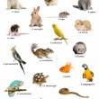 Collage of pets and animals in Italian in front of white background, studio shot — Stock Photo