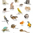 Collage of pets and animals in Spanish in front of white background, studio shot — Stock Photo
