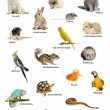 Collage of pets and animals in German in front of white background, studio shot — Stock Photo