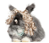 English Angora rabbit in front of white background — Stock Photo