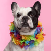 French Bulldog, 3 years old, wearing Hawaiian lei front of pink background — Stock Photo