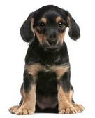 Mixed breed puppy sitting in front of white background — Stock Photo