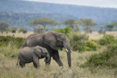 Elephants in Serengeti National Park, Tanzania, Africa — Stock Photo