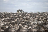 Tourists watching large herd of wildebeest and zebras at the Serengeti National Park, Tanzania, Africa — Stock Photo