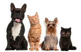 Group of cats and dogs sitting in front of white background — Stock Photo