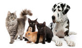 Group of dogs and cats sitting in front of white background — Stock Photo