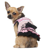 Chihuahua in pink dress, 12 months old, sitting in front of white background — Stock Photo