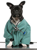 Crossbreed dog, dog dressed in a doctor coat and wearing a stethoscope against a white background — Stock Photo