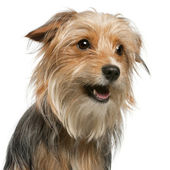Close-up of Mixed-breed dog, 12 months old, in front of white background — Stock Photo