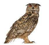 Portrait of Eurasian Eagle-Owl, Bubo bubo, a species of eagle owl, standing in front of white background — Stock Photo