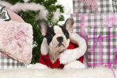 French Bulldog puppy, 13 weeks old, lying with Christmas gifts in front of white background — Stock Photo