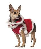 Kříženec, pes, 4 roky staré, před bílým pozadím — Stock fotografie