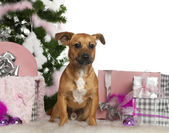Mixed-breed dog, 7 months old, with Christmas tree and gifts in front of white background — Stock Photo