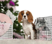 Cavalier King Charles Spaniel puppy, 6 months old, with Christmas tree and gifts in front of white background — Stock Photo
