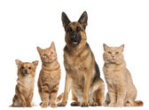 Group of dogs and cats sitting in front of white background — Stok fotoğraf