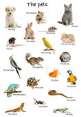 Collage of pets and animals in English in front of white background, studio shot — Stock Photo