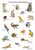 Collage of pets and animals in French in front of white background, studio shot — Foto Stock