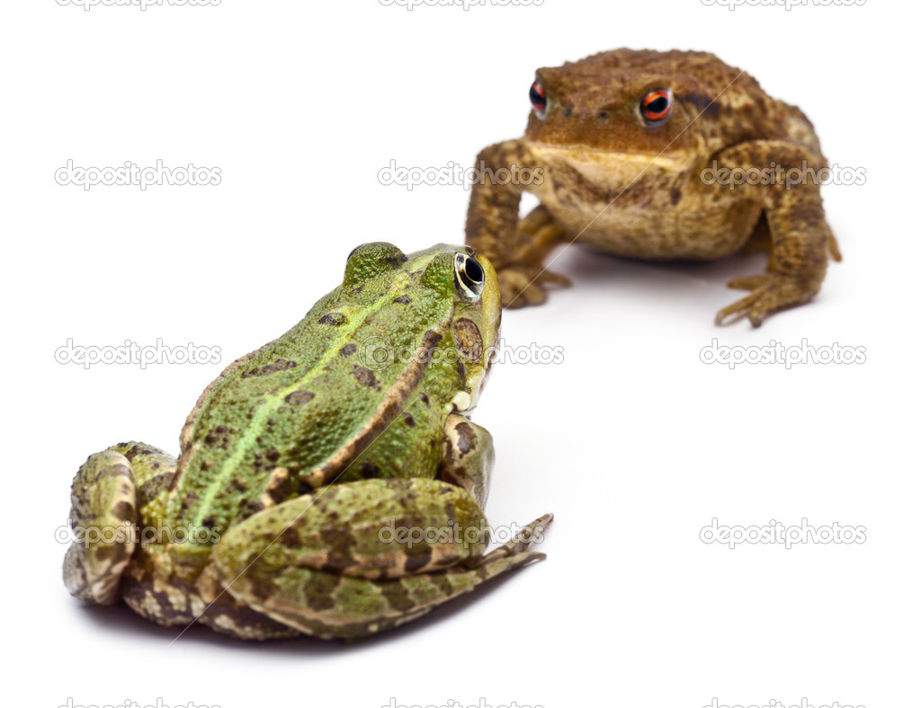 жаба программа скачать