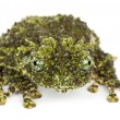 Mossy Frog, Theloderma corticale - Stock Photo