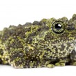 Stock Photo: Mossy Frog