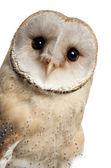 Barn owl, tyto alba, 4 maanden oud, portret en sluit vervolgens tegen witte achtergrond — Stockfoto