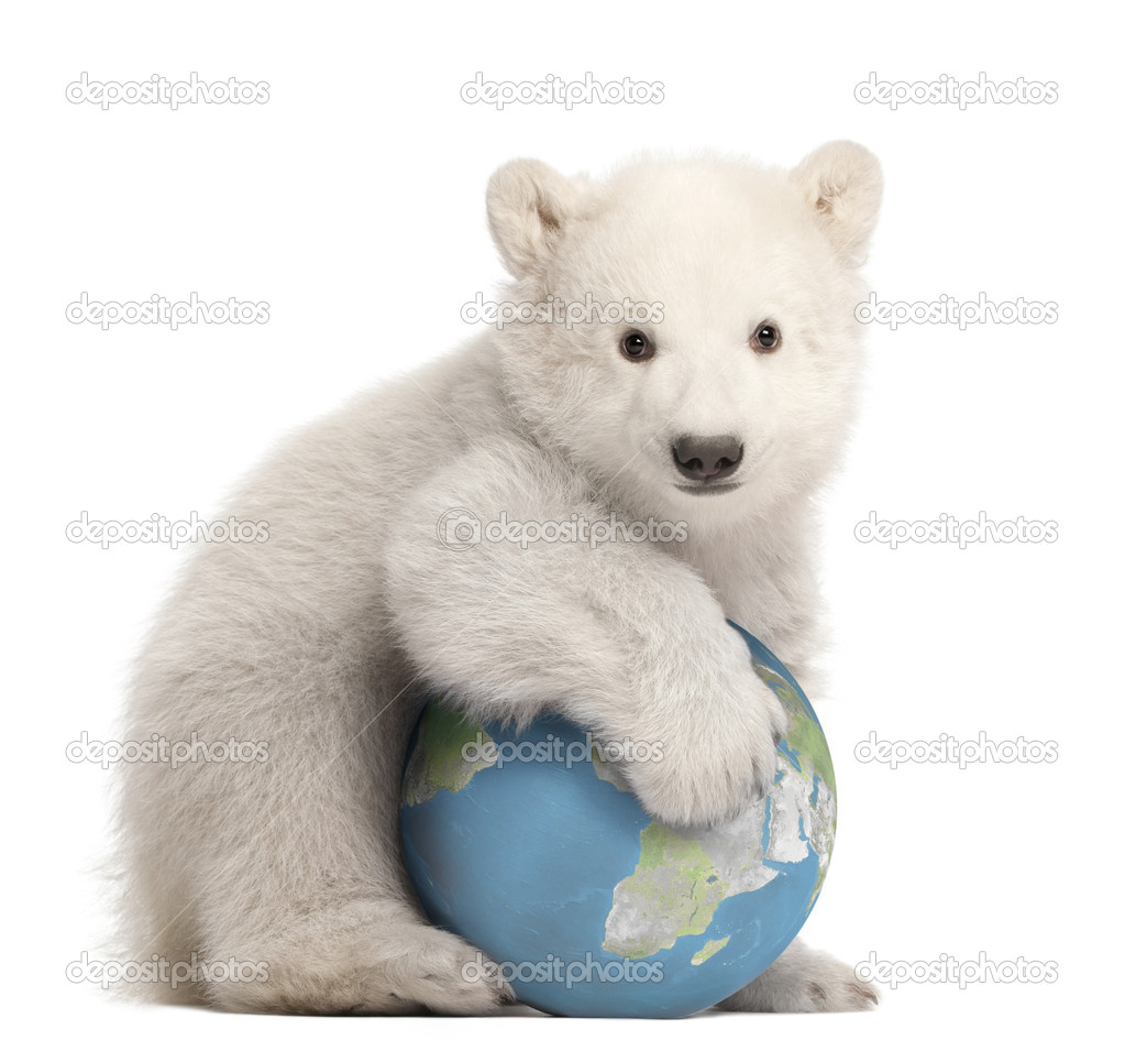 Polar bear cub, Ursus maritimus, 3 months old, with globe sitting against white background  Foto Stock #11718789