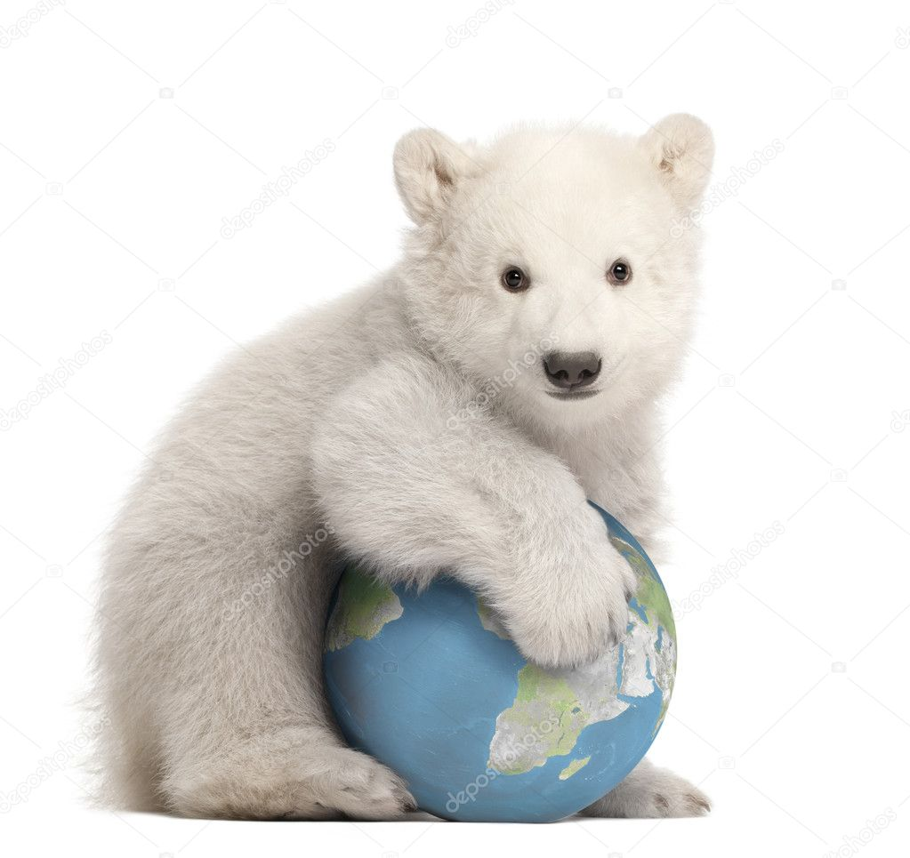 Polar bear cub, Ursus maritimus, 3 months old, with globe sitting against white background — Lizenzfreies Foto #11718789