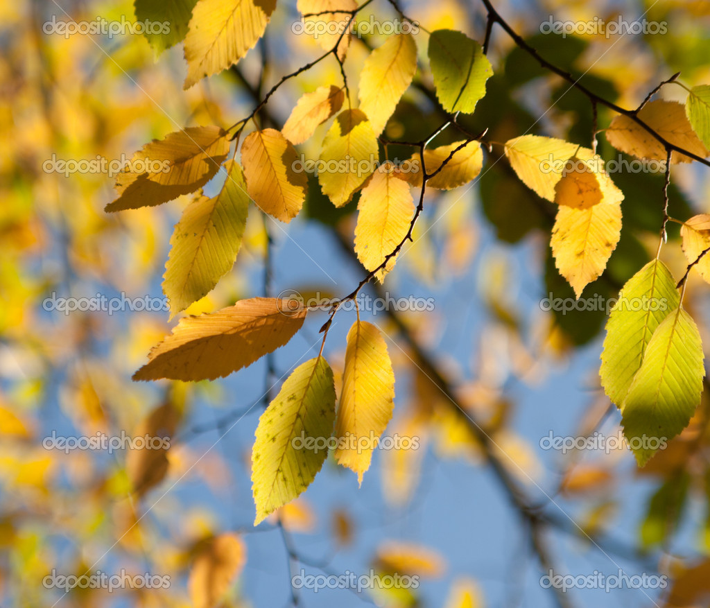 Photo of autumn leaves against the sky in a forest  Stock Photo #10988712