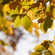 Autumn branches in a forest — Stock Photo