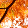 Autumn branches of fir — Stock Photo