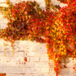 Autumn leaves on the wall — Stock Photo