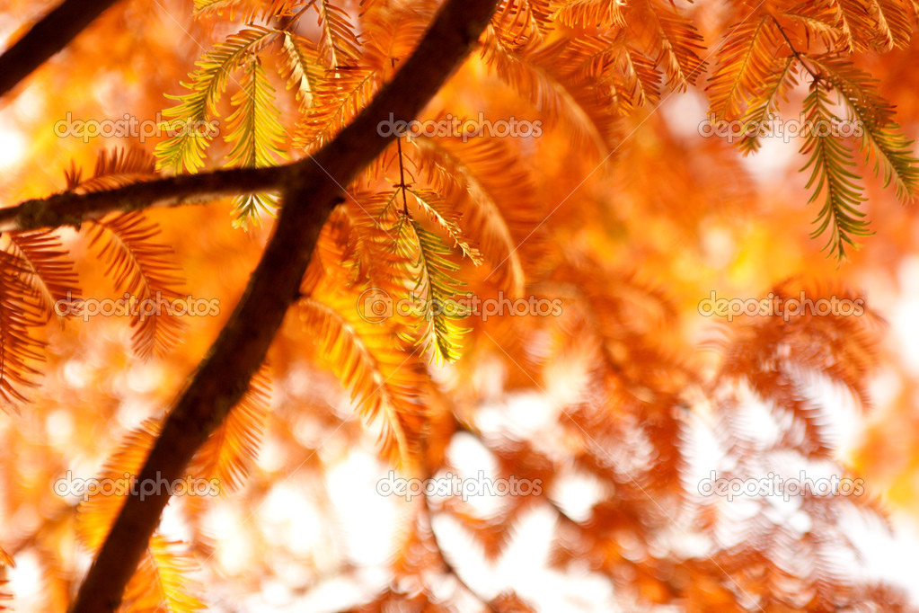 Photo of autumn branches of fir — Stock Photo #11058959