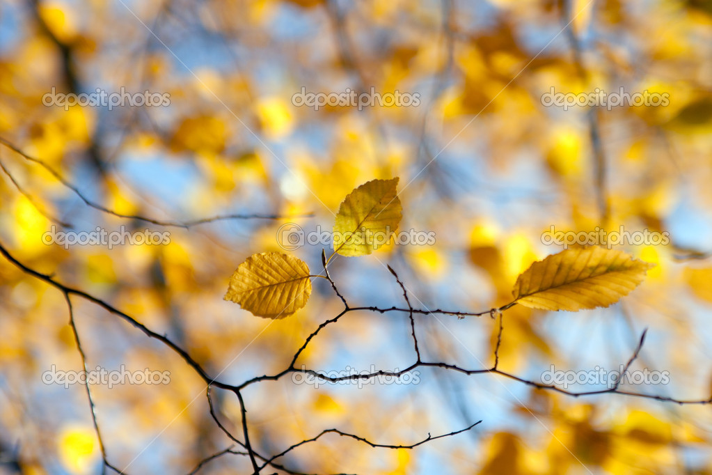 Photo of autumn leaves in the forest — Stock Photo #11059044