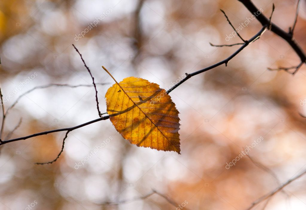 Photo of autumn leaf lying on a tree branch — Stock Photo #11059072