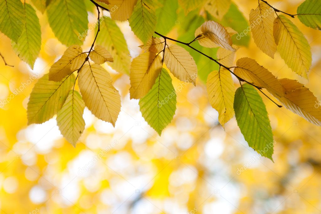 Photo of autumn leaves on a tree — Stock Photo #11059318