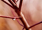 Dewdrop on twig — Stock Photo