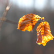 Dry leaves in the sunlight — Stock Photo