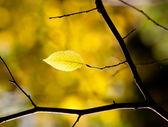Single autumn leaf in the forest — Stock Photo