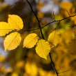 Autumn branch in sunlight — Stock Photo