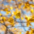 Stock Photo: Autumn colors