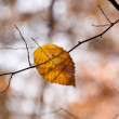 Autumn leaf lying on a tree branch — Stock Photo