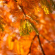 Fir branches in the sunshine — Stock Photo